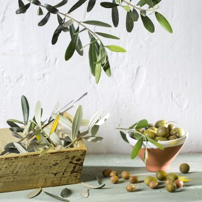 STAR - Olive oil healthy